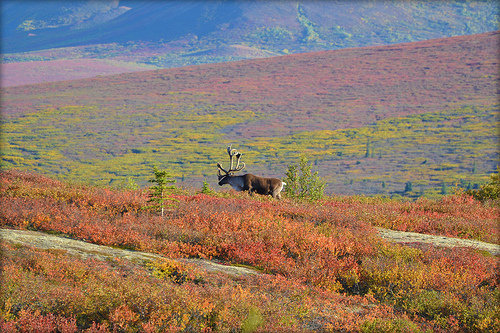 National Parks For Nature Photographers
