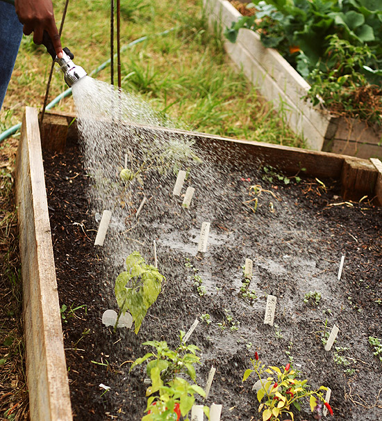 Simple Rainwater Harvesting Tips For Your Garden