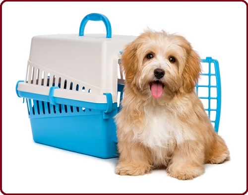 Choose The Best Dog Transport Companies For Your Loved One Dog