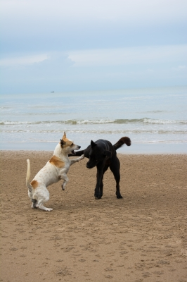 Holiday Time: What Do With The Dogs?