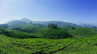 Exploring The Tea Plantations Of Munnar