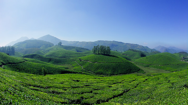 Exploring The Tea Plantations Of Munnar