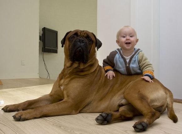 Are Big Dogs Perfect For Families With Small Children