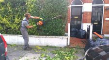 Highly Professional Tree Surgeons In Harrow