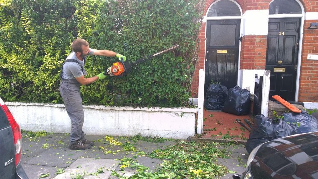 Highly Professional Tree Surgeons In Harrow