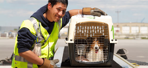 PET TRAVEL LAWS IN THE UK AND OTHER EU COUNTRIES
