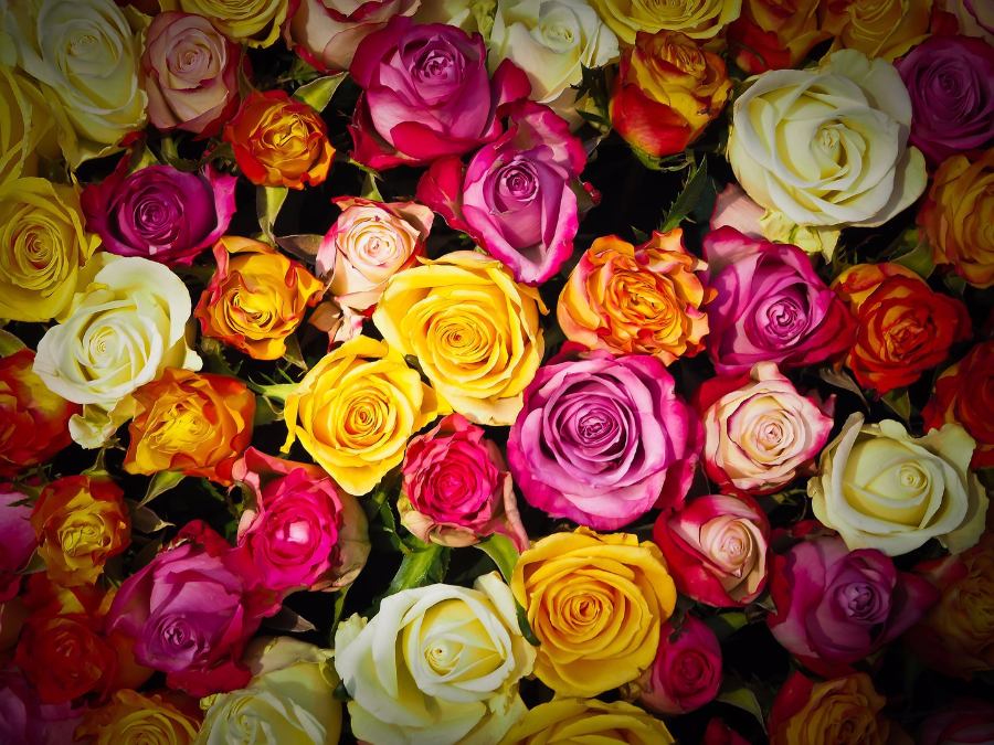 Everything You Need To Know About Roses