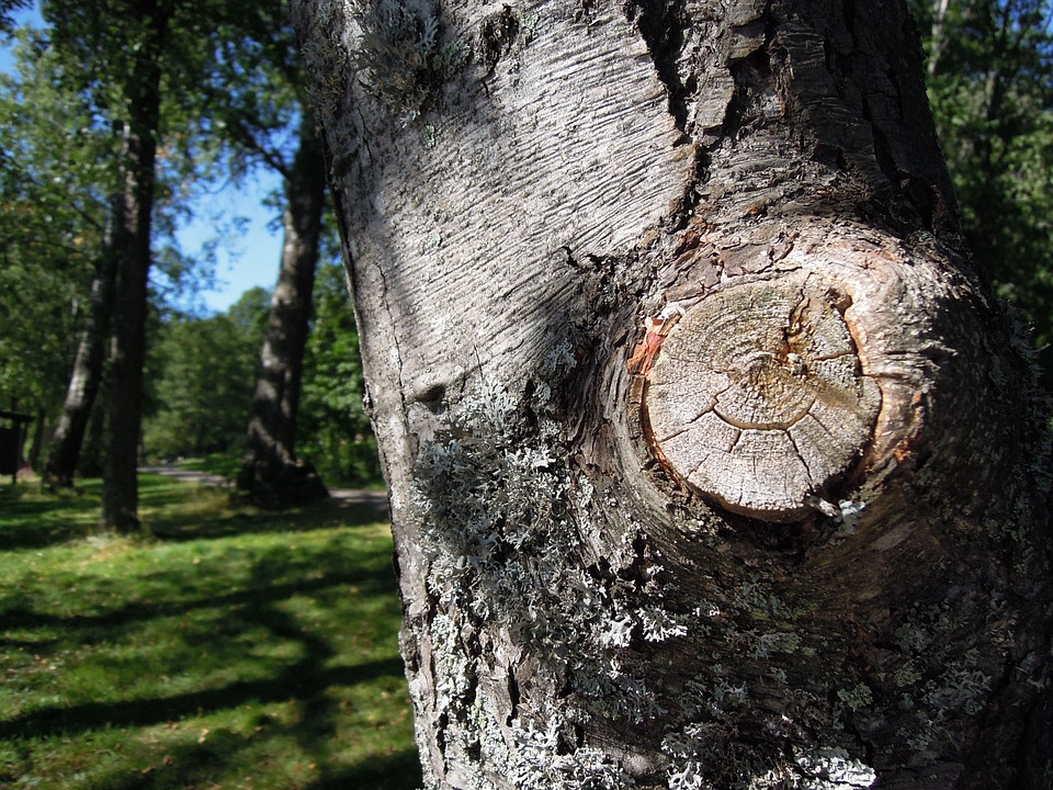 Tree Services Marietta And Alpharetta