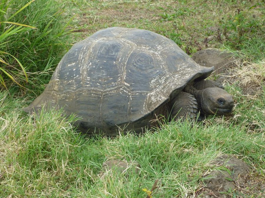 Making The Most Of Your Trip To The Galapagos