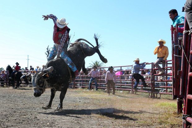 Making Events Entertaining With Rodeo Bull Rides