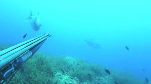 Tips For Spearfishing Safety