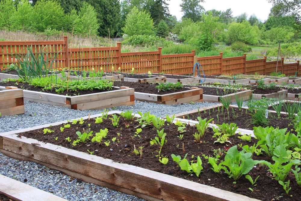 10 Useful Herbs To Grow In Your Garden or Indoors