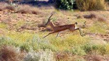 Explore Desert National Park In Jaisalmer