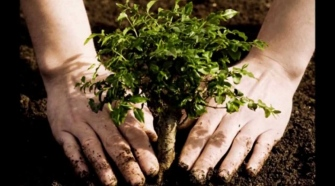 The Significance Of Trees and How To Grow Your Tree