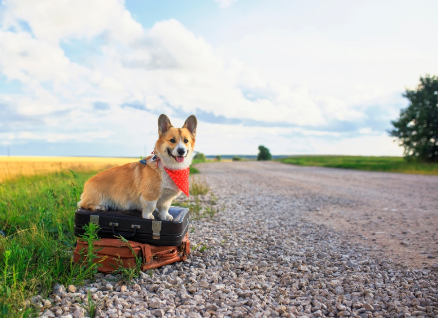 Tips For Visiting Asheville With A Dog