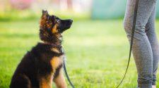 Understanding Your Dog